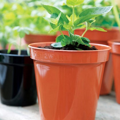 Premium Flower Pot Range